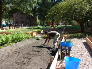 Farms at NYCHA - Green City Force